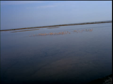 aerial point of view of flock of flamingos flying over water / camarge, provence, france - akvatisk organism bildbanksvideor och videomaterial från bakom kulisserna