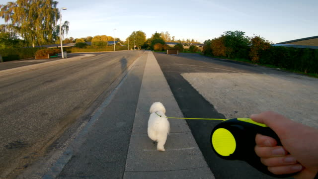 vídeos de stock e filmes b-roll de point of view of man taking his his dog for a walk - ponto de vista