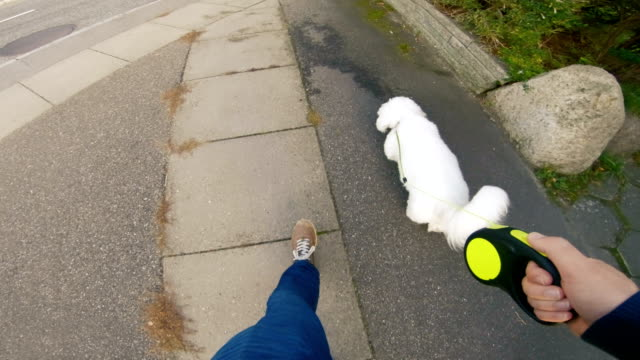 point of view of man walking his dog on sidewalk - pet leash stock videos & royalty-free footage