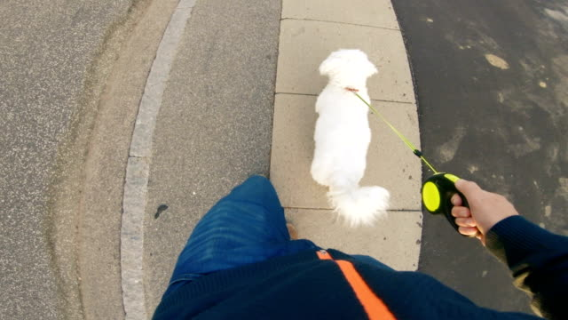 point of view of man walking with his dog on sidewalk - pet leash stock videos & royalty-free footage