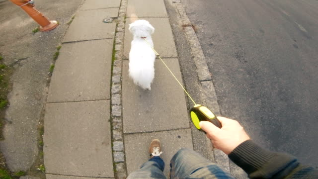point of view of pet owner holding a leash to control his dog - point of view stock videos & royalty-free footage