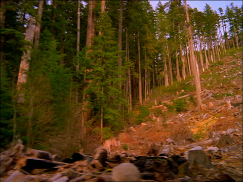stockvideo's en b-roll-footage met point of view past clearings with tree stumps in forest/de-forestation - boomstronk