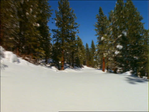 point of view thru snow and pine trees - pinaceae stock videos & royalty-free footage