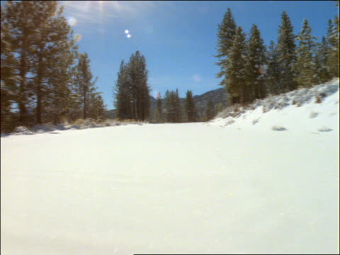 point of view thru snow lined with pine trees - pinaceae stock videos & royalty-free footage