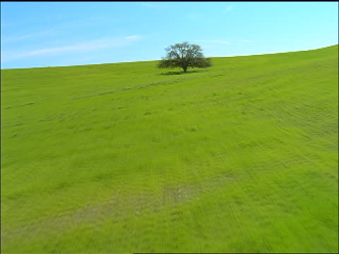 aerial point of view toward + over lone oak tree on green alfalfa covered hills / north of la, california - cinematography stock videos & royalty-free footage