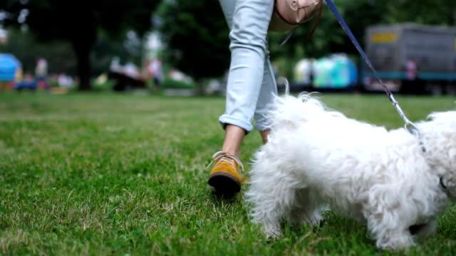 Point of view walking dog
