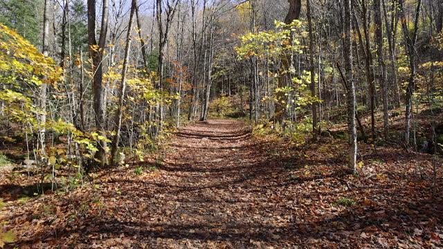 vidéos et rushes de point de vue marchant sur le sentier avec des feuilles tombées de couleur dans la saison d'automne - automne