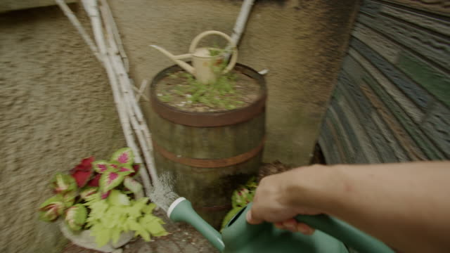 point of view watering can flowers human hand dusk garden - watering can stock videos and b-roll footage