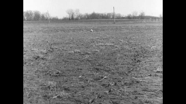 vidéos et rushes de pointer 'sulu' ws judges on horseback vs 'sulu' pointer dog running in field ms handler signaling dog ws dog changing directions judge on horseback... - équitation de loisir
