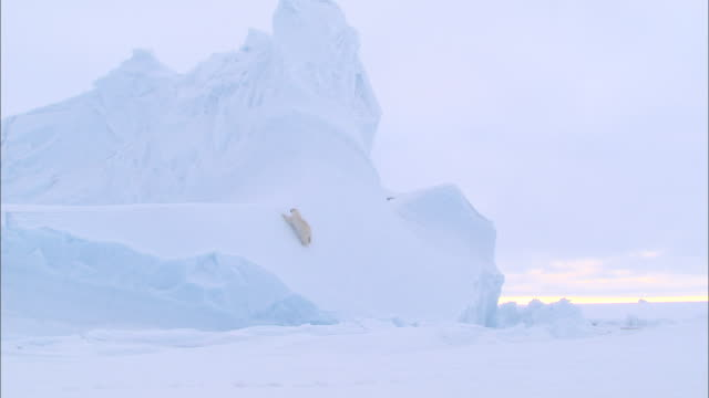 a polar bear crawling on an ice wall in the north pole - north pole stock videos & royalty-free footage