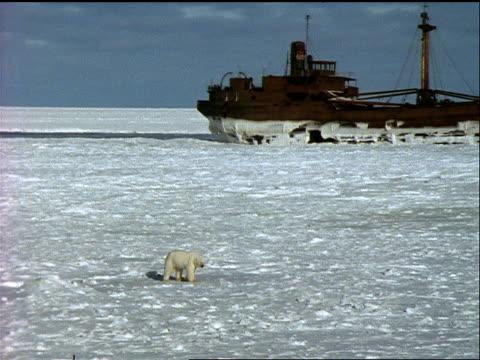 a polar bear crawls past a rusting shipwreck. - 水の形態点の映像素材/bロール
