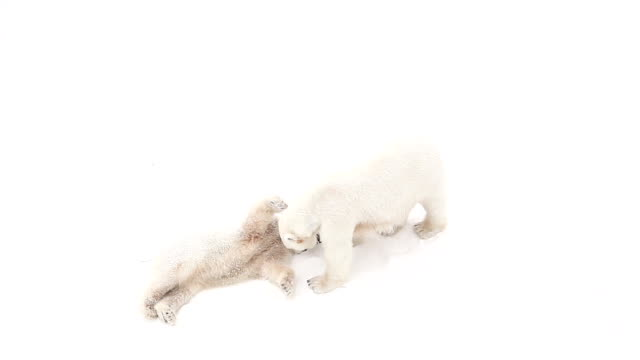 polar bear cub - young animal stock videos & royalty-free footage