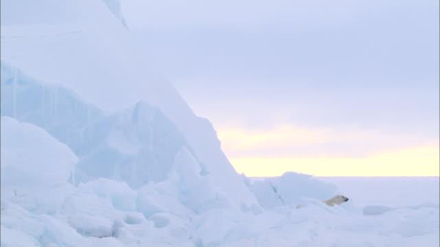 a polar bear looking around next to an iceberg in the north pole - kopf nach hinten stock-videos und b-roll-filmmaterial