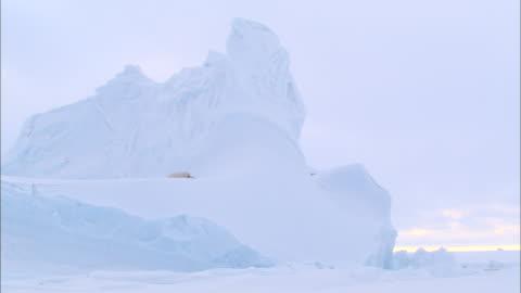 a polar bear lying down on an iceberg in the north pole - nordpolen bildbanksvideor och videomaterial från bakom kulisserna