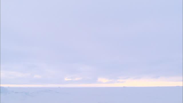stockvideo's en b-roll-footage met a polar bear lying down on an iceberg in the north pole - vlakte