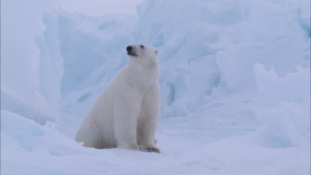 a polar bear lying sitting under an iceberg in the north pole - sitting stock videos & royalty-free footage