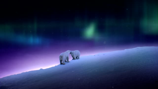 polar bear night - bear stock videos and b-roll footage