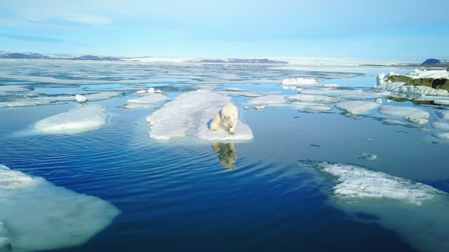 ha polar bear on ice floe scratching its head comically - ice floe stock videos & royalty-free footage