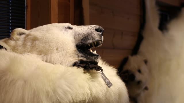 polar bear pelt for sale in a shop in longyearbyen on svalbard. - animal hair stock videos & royalty-free footage