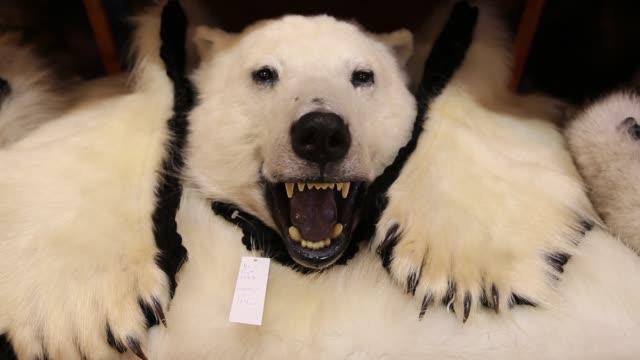 polar bear pelt for sale in a shop in longyearbyen on svalbard. - claw stock videos & royalty-free footage