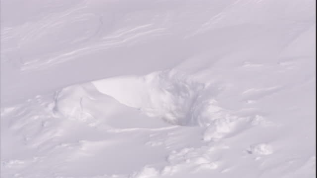 a polar bear pokes its head out of a den in the snow on svalbard, norway. - loch stock-videos und b-roll-filmmaterial