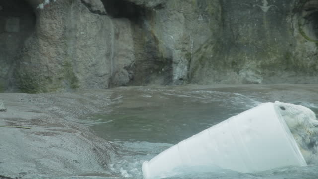 a polar bear repeatedly pushes a large barrel into the water - stahlfass stock-videos und b-roll-filmmaterial