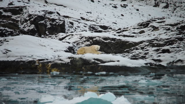 polar bear resting on rock in water, wide shot - glacier stock videos & royalty-free footage