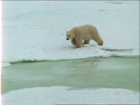 a polar bear skirts around a break in the ice. - 水の形態点の映像素材/bロール