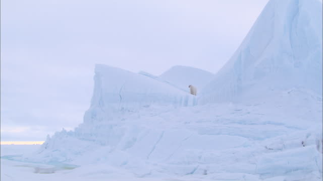 a polar bear walking on an iceberg in the north pole - north pole stock videos & royalty-free footage