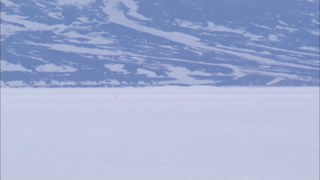 a polar bear walking on the snow-covered ground in the north pole - wide stock videos & royalty-free footage