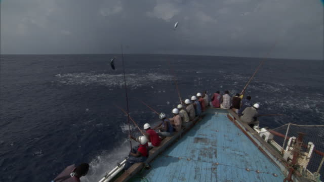 pole fishermen catch and fling skipjack tuna on deck, solomon islands - 水産業点の映像素材/bロール