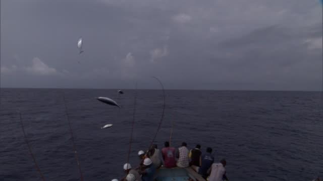 vídeos de stock, filmes e b-roll de pole fishermen catch and fling skipjack tuna on deck, solomon islands - indústria da pesca