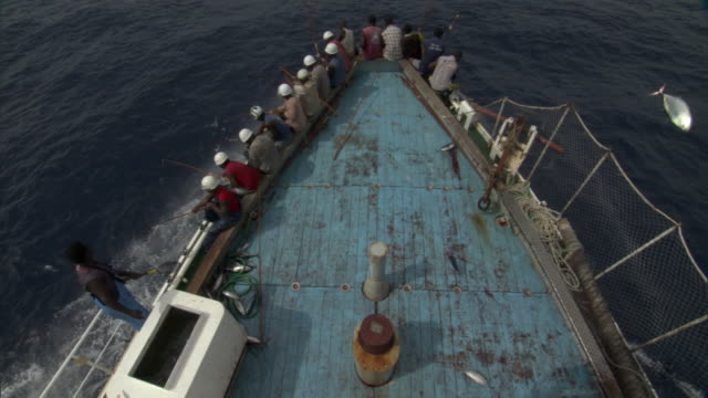Pole fishermen catch and fling skipjack tuna on deck, Solomon Islands