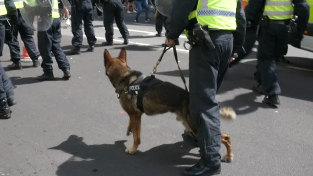 a police dog barks at protesters on june 13 2020 in london united kingdom following a social media post by the farright activist known as tommy... - mammal stock videos & royalty-free footage