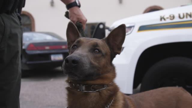 vídeos y material grabado en eventos de stock de police dog close up - sin editar