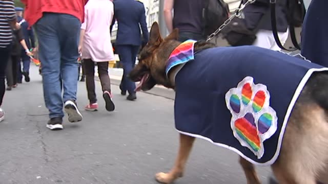 police dogs jacket with rainbow paw print logo walking in wellington's pride parade - paw print stock videos & royalty-free footage