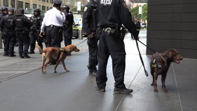 police dogs nypd presence as time warner building evacuated because of suspicious pipe bomb delivered to cnn offices - cnn stock videos & royalty-free footage