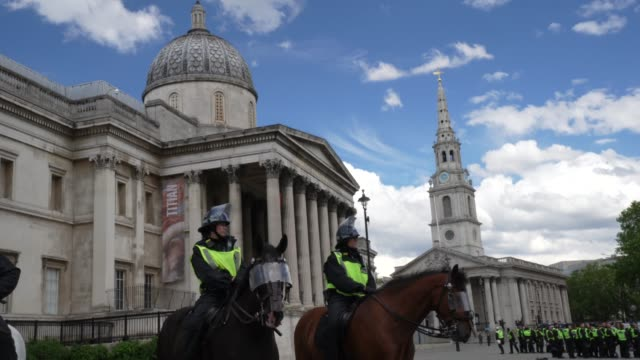 police horses gather near trafalgar square on june 13 2020 in london united kingdom following a social media post by the farright activist known as... - mammal stock videos & royalty-free footage