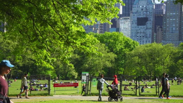 police officers will limit access to the central park sheep meadow to prevent overcrowding. - green colour stock videos & royalty-free footage
