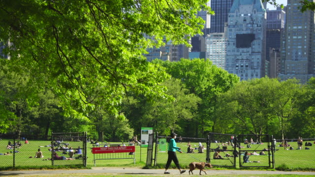 police officers will limit access to the central park sheep meadow to prevent overcrowding - tree trunk stock videos & royalty-free footage
