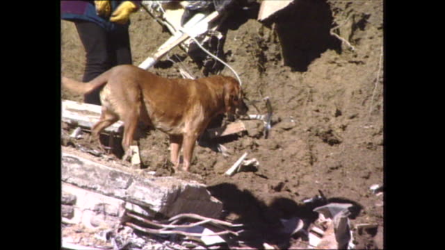 police rescue sniffers dogs at landslide rescue site / workers scramble over rubble / worker climbs up slope beside hitachi digger / various shots... - rescue worker stock videos & royalty-free footage
