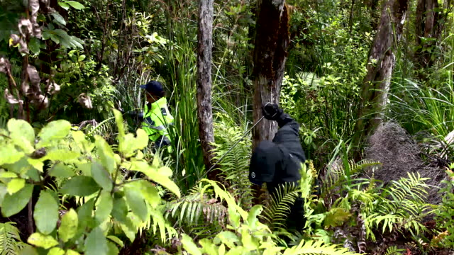 police search the roadsides in the area where grace millane's body was found. - missing people stock videos & royalty-free footage