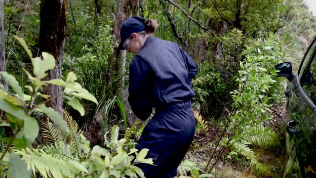 police search the roadsides in the area where grace millane's body was found - murder stock videos & royalty-free footage