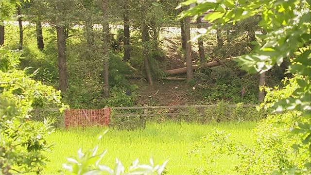 police watchdog to investigate after couple lay undiscovered in crashed car for 3 days scotland near stirling m9 motorway ext gap in trees where car... - スコットランド スターリング点の映像素材/bロール