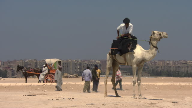 policeman on camel - giza pyramids, egypt - horse cart stock videos and b-roll footage