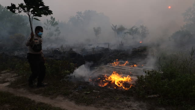 policeman uses a branch to extinguish the fire on burned peatland and fields on september 14, 2019 in the outskirts of palangkaraya, central... - extinguishing stock videos & royalty-free footage