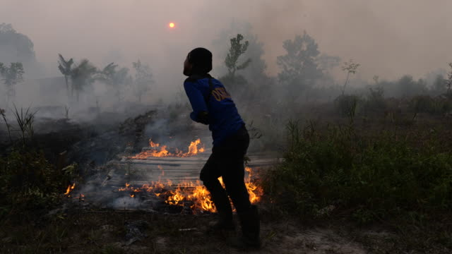 a policeman uses a branch to extinguish the fire on burned peatland and fields on september 14 2019 in the outskirts of palangkaraya central... - kalimantan stock videos and b-roll footage