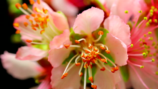 pollen blooming - stamen stock videos and b-roll footage