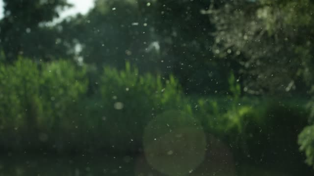 pollen floats in the air backlit by the sun - pollen grain stock videos & royalty-free footage