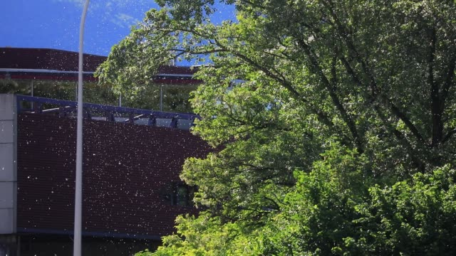 pollen floats in the air during spring on april 29 2020 in chambery france - bronchus stock videos & royalty-free footage